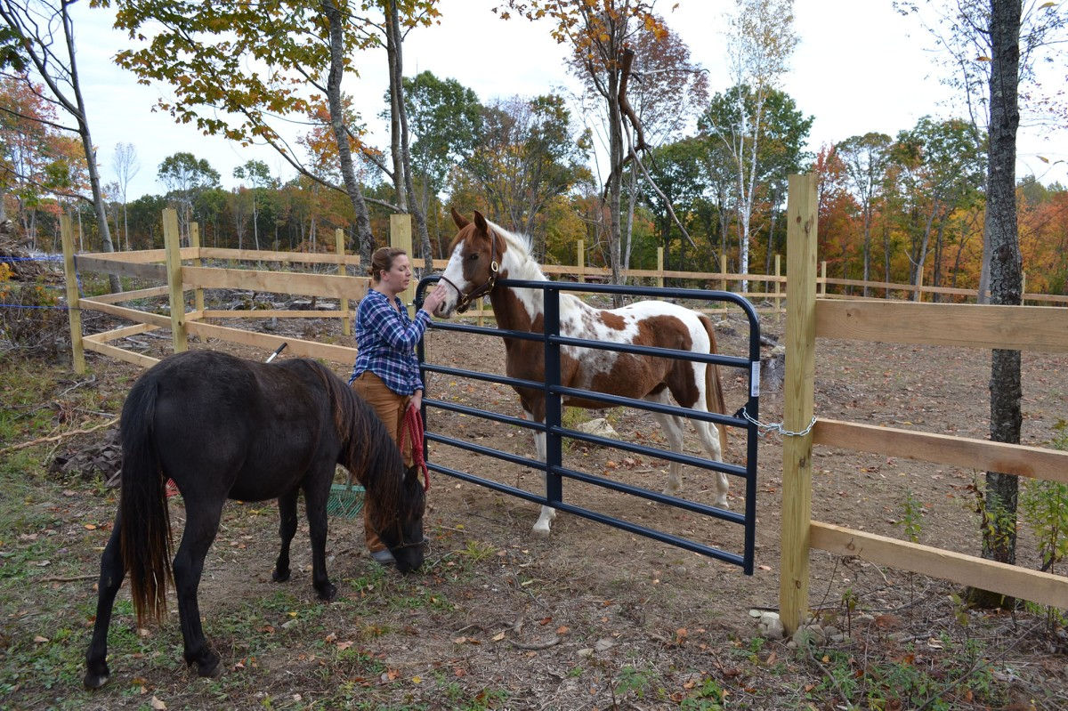 Horses, horses, and morehorses…